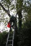Zwei Personen aus Baumkrone gerettet_14