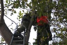 Zwei Personen aus Baumkrone gerettet_17