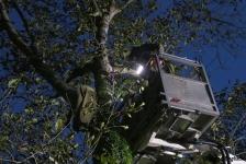 Zwei Personen aus Baumkrone gerettet_25