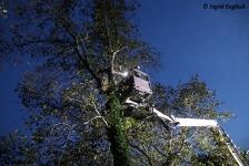 Zwei Personen aus Baumkrone gerettet_26