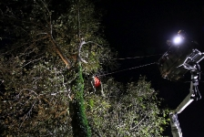 Zwei Personen aus Baumkrone gerettet_30