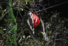 Zwei Personen aus Baumkrone gerettet_31